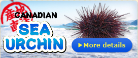 Canadian Sea Urchin