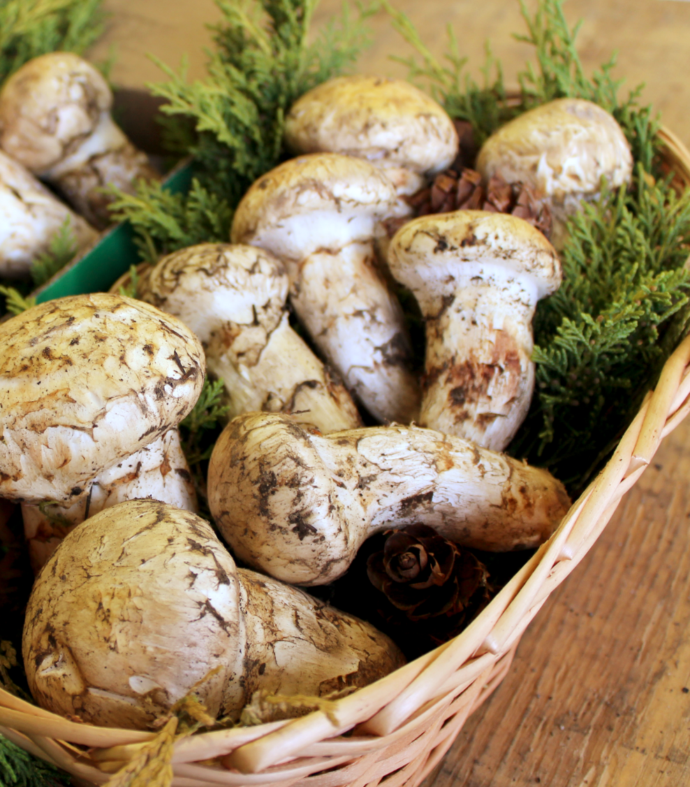 Fresh Matsutake door to door delivery